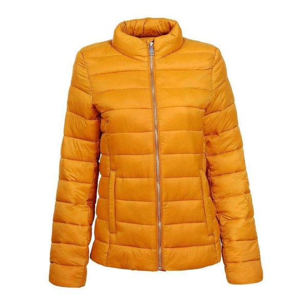 Yellow-jacket-586923